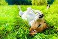愛犬に日光浴をさせ…の画像