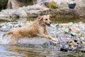 犬と川遊びができる…の画像