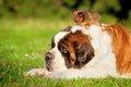 超大型犬5選!愛ら…の画像