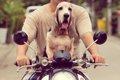 犬とバイクでツーリ…の画像