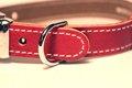犬の首輪が革材質の…の画像