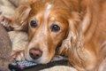 愛犬がテレビを見て…の画像