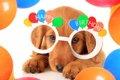愛犬の誕生日の祝い…の画像