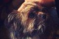 犬のマイクロチップ…の画像