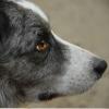 これから犬を飼う人…の画像