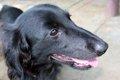 保護犬と暮らそうと…の画像