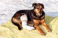 犬を骨折させないた…の画像
