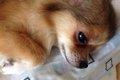愛犬のよだれ!症状…の画像