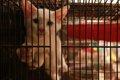 犬の避妊手術(去勢…の画像