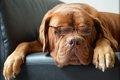 老犬の健康管理の心…の画像