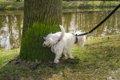 犬のマーキングとお…の画像