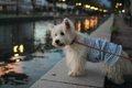 犬と楽しめる神戸の…の画像