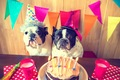 愛犬の誕生日!わん…の画像