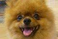 帰国子女犬を応援し…の画像
