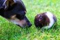 犬とハムスターは同…の画像