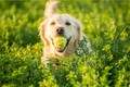 【得意な犬は優秀な…の画像