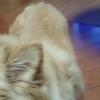愛犬の耳はいつも清…の画像