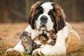 保護犬に家族を!台…の画像