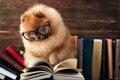 犬の「飼い主検定」…の画像
