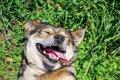 かわいい~♡犬のお腹…の画像