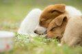 犬にも日光浴は必要…の画像