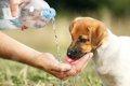 犬とって炭酸水は危…の画像