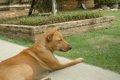タイは犬の楽園?実…の画像