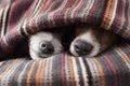 犬が小刻みに震える…の画像