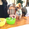 愛犬とドッグカフェ…の画像