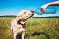 犬の熱中症を避ける…の画像