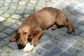 愛犬の拾い食いをや…の画像