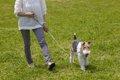 犬と行くドッグラン…の画像