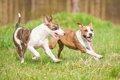 愛犬を落ち着かせる…の画像