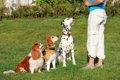 犬のトレーニングの…の画像