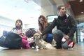 誘拐された犬がマイ…の画像