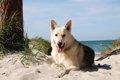 犬との旅行は飼い主…の画像