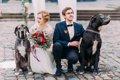 愛犬と一緒に結婚式…の画像