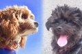 子(犬)育てはセラ…の画像