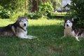 犬にスポーツドリン…の画像