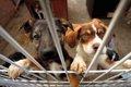 保護施設にいる犬に…の画像