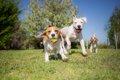 犬に優しいサービス…の画像