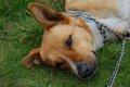 犬の膿皮症の正しい…の画像
