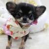 極小犬を飼う時に注…の画像
