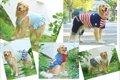 お台場で「愛犬と旅…の画像