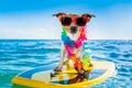 犬と一緒にハワイに…の画像
