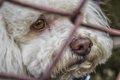 捨て犬の里親になる…の画像