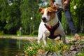 犬との暮らしでのヒ…の画像