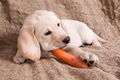 犬は腐ったものを食…の画像