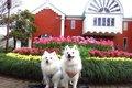 愛犬と巡る横浜散歩…の画像