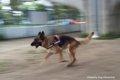 犬の散歩の時間はど…の画像
